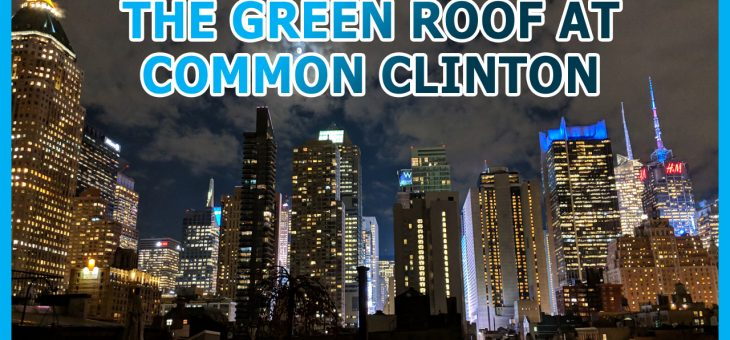 R/Evolution of 424 W 47th St Part 7: Green Roof South View